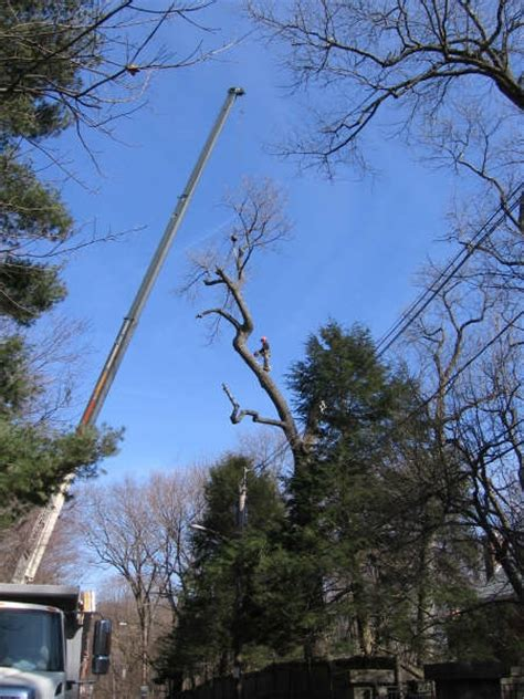 commercial tree removal services in dartmouth ns arbor