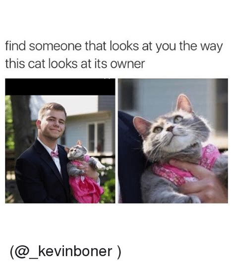 Find A Meme - find someone that looks at you the way this cat looks at