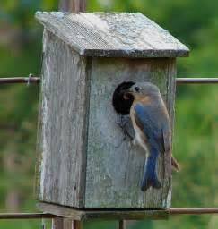 creation bluebirds fellowship of the minds