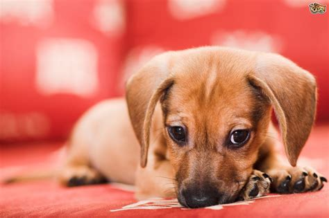 keeping your the furniture pets4homes