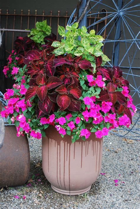 Beautiful Planter Ideas by What I By Beautiful Pots Dirt Simple
