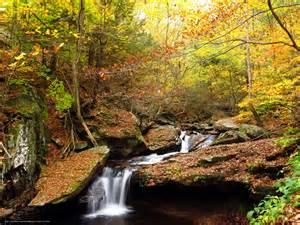 Free Wallpaper Wallpaper Forest Rocks Waterfall Autumn Free