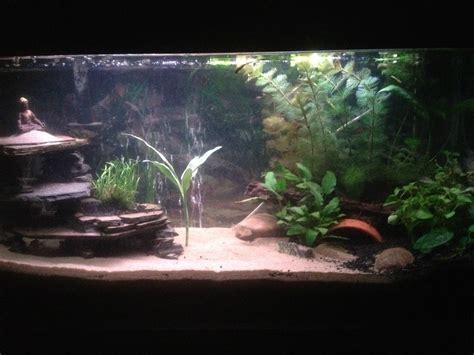 aquarium design using slate my diy slate cave aquarium advice aquarium forum