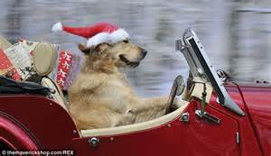 santa hats for dogs hilarious hounds in hats calendar shows dogs getting all