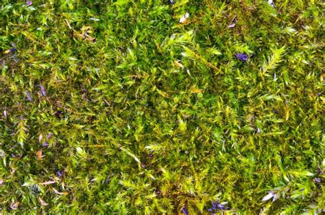 Herb Garden Box by The Texture Of Green Moss In High Resolution Stock Photo