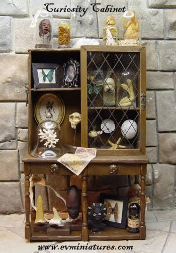 your own cabinet of curiosities 17 best images about create your own cabinet of