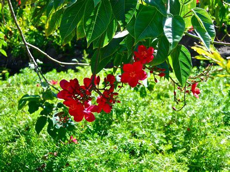 Bright Garden Flowers Pictures Of Garden Flowers Photograph Gardening Bright