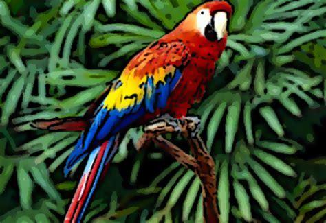 burung burung kakatua