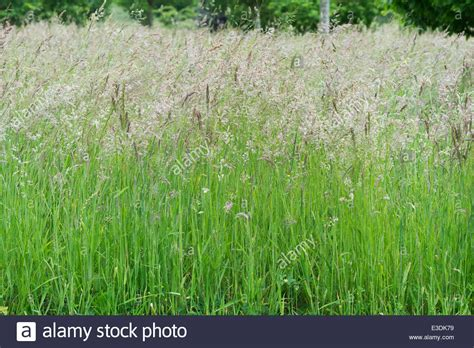 The Forgotten Garden by Long Meadow Grass Going To Seed In The English Countryside