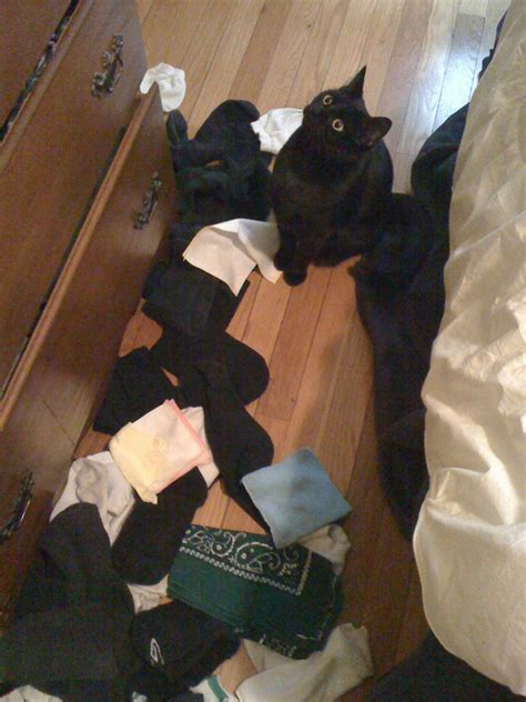 sock drawer relax my cat bad 10 photos of cats whose looks say