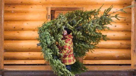 den weihnachtsbaum richtig lagern