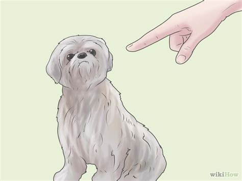 how to potty a shih tzu puppy how to potty a shih tzu 6 steps with pictures wikihow