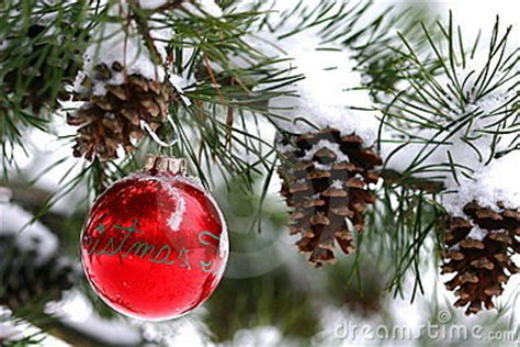 red christmas decoration  snow covered pine tree outdoors stock photography image