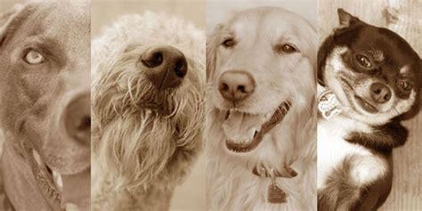 puppys playpen puppys playpen overland park ks owner prlog