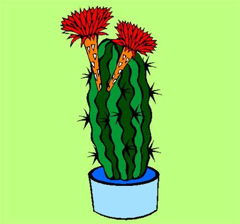 cactus fioriti disegno cactus fioriti colorato da utente non registrato