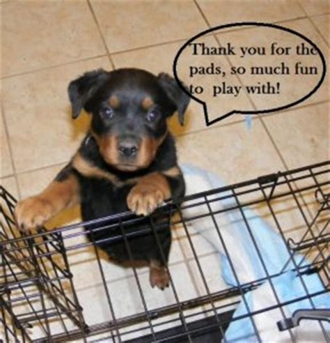 how do puppy pads work understanding pads and how they work daily discoveries