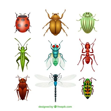 imagenes de insectos vectores insect vectors photos and psd files free download
