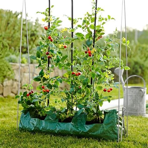 Vertical Gardening Tomatoes Pin By Shepherd On Gardening
