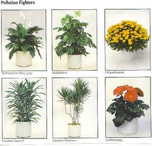 Common Apartment Plants 10 Best Plants For Improving Air Quality Tao Big