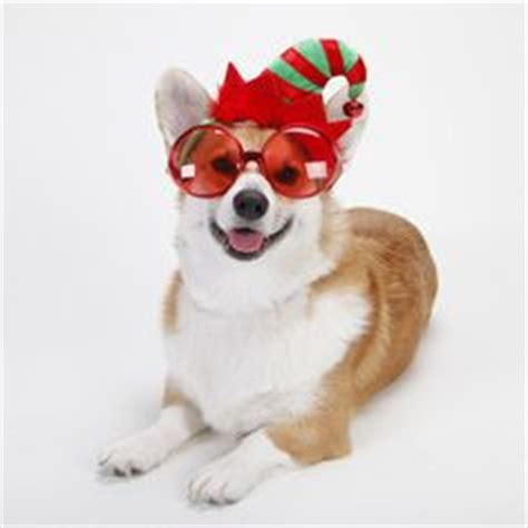 henry the ã s corgi a feel festive read to curl up with this books 1000 images about corgis at on