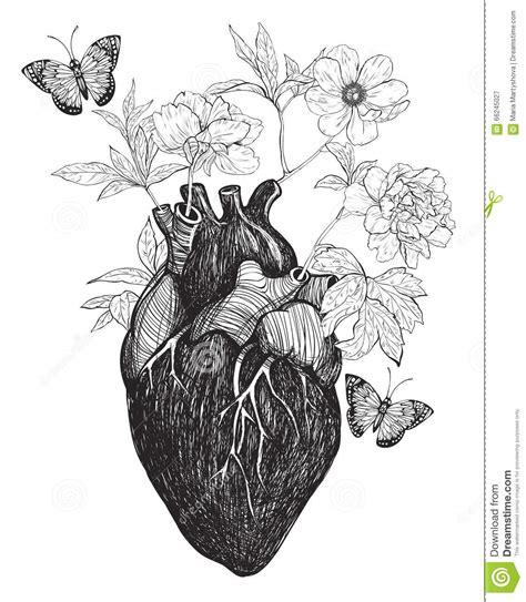 menschliche anatomische herz whith blumen vektor abbildung