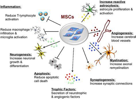 Aqua Bio Stem Cell Activator mesenchymal stem cells properties process functions