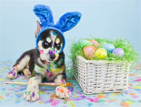 easter puppy easter egg hunt and pet adoption plano profile connecting collin county