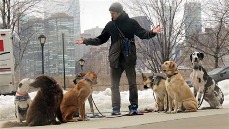 Nyc Backyard This Dog Walker Probably Makes More Money Than You Do