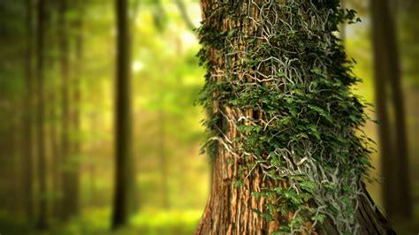 wallpaper hd tree trees hd wallpaper 2015
