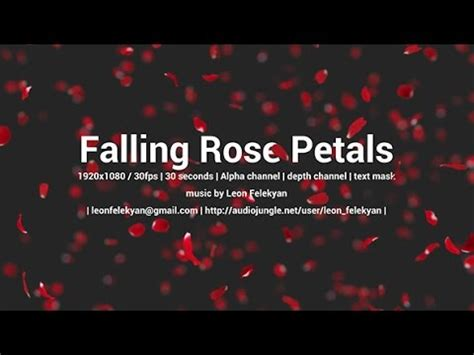 Falling Rose Petals After Effects Template Youtube Falling Flower Petals After Effects Template Free