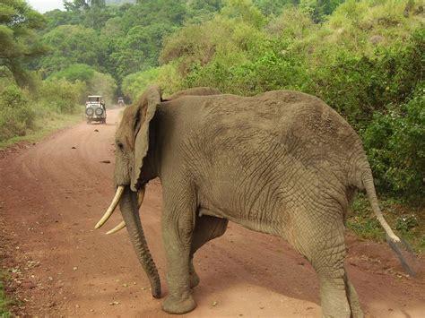 nel parco viaggio attraverso i parchi della tanzania nord