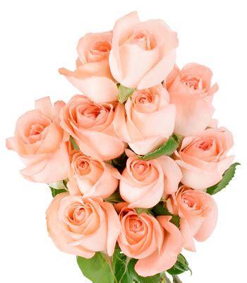 wallpaper bunga peach sebuah makna dari bunga mawar izzan i nm2k
