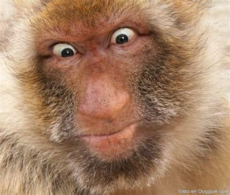 imagenes asombrosas de animales raros raros animales con apariencia humana dogguie
