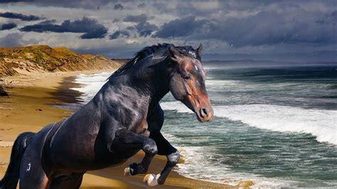 wallpaper hd 1920x1080 horses horse full hd wallpaper and background 1920x1080 id 241269