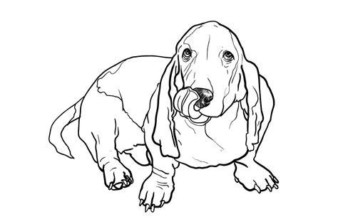 Wp Site Search Pro V160919 20557 basset hound illustrations creative market
