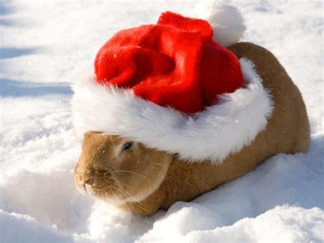 images of christmas animals cute christmas animals