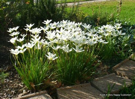 Pupuk Untuk Bunga Taman tanaman hias untuk taman minimalis bibit