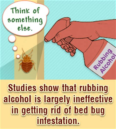 alcohol for bed bugs bed bugs buzzle com