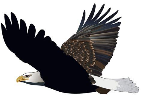 eagles  harry potter lexicon