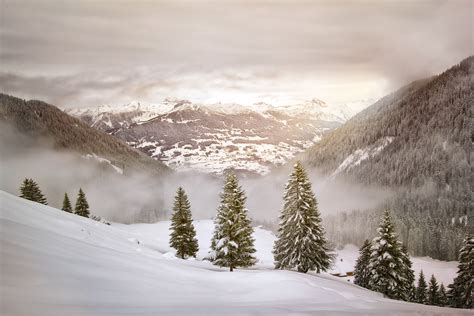 winter landscape covered in snow with pine trees image - Winter Hütte