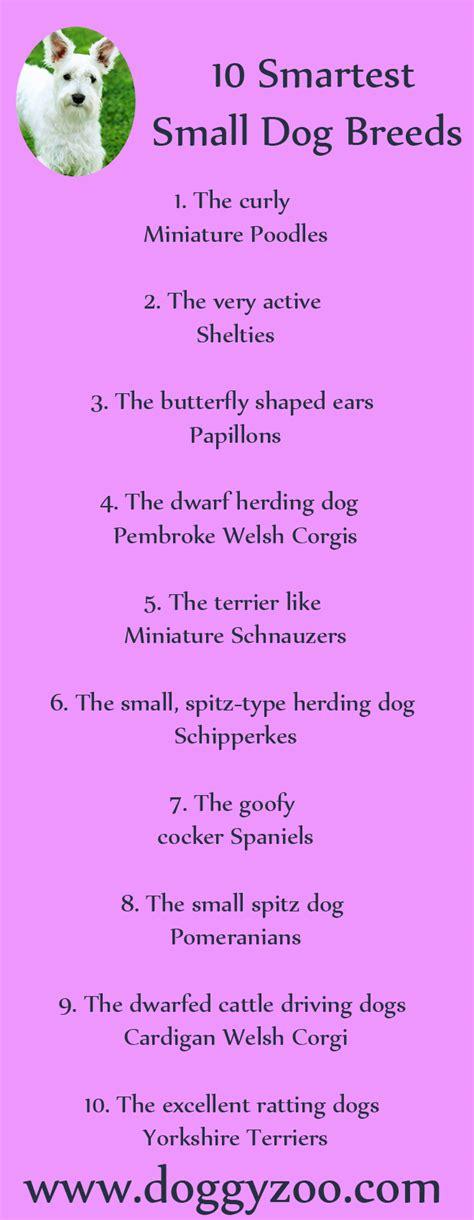 smartest small breeds 10 smartest small breeds doggyzoo comdoggyzoo
