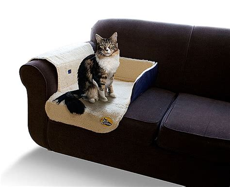 cat hair on couch tips in cleaning cat mess on sofa home services guides 101