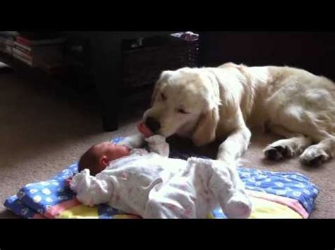 big dogs big hearts large breeds big dogs with big hearts