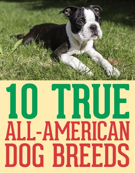 all american dogs 10 true all american breeds