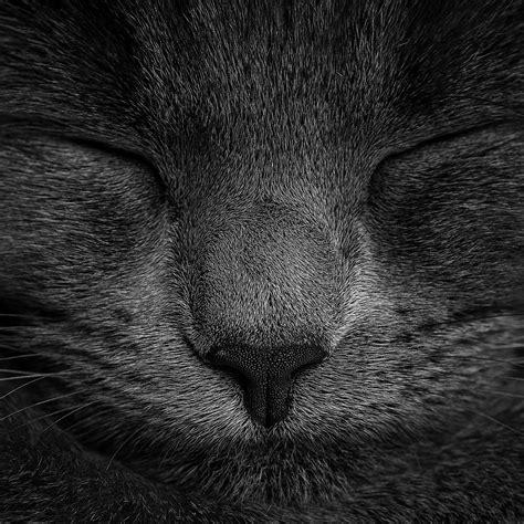 ae sleeping black cat zoom nature wallpaper