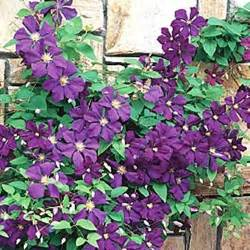 Best Climbing Plants - best climbing plants for trellises arbors and pergolas