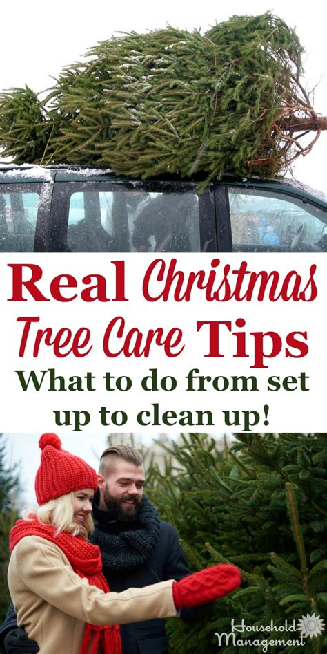 real christmas tree care tips from set up to clean up