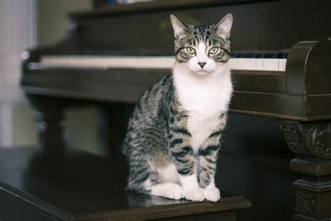 how to tell what breed your is how to determine your cat s breed what breed is your cat