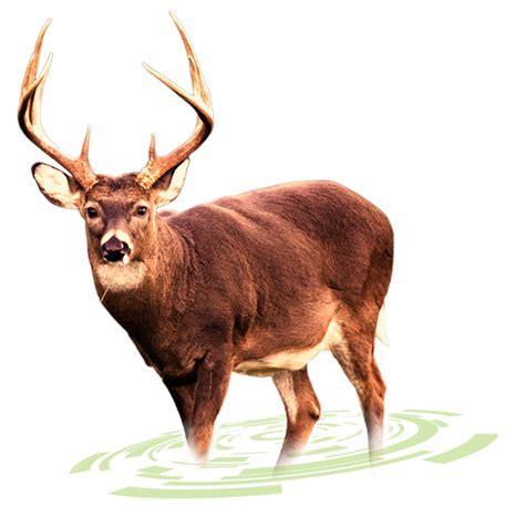 how to your to track deer big logic trail and deer management software