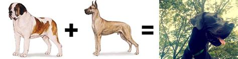pug st bernard mix 26 mutt math equations barkpost